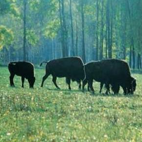 Путешествие в Приокско-Террасный заповедник